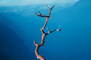 bird's eye view photography of bare tree